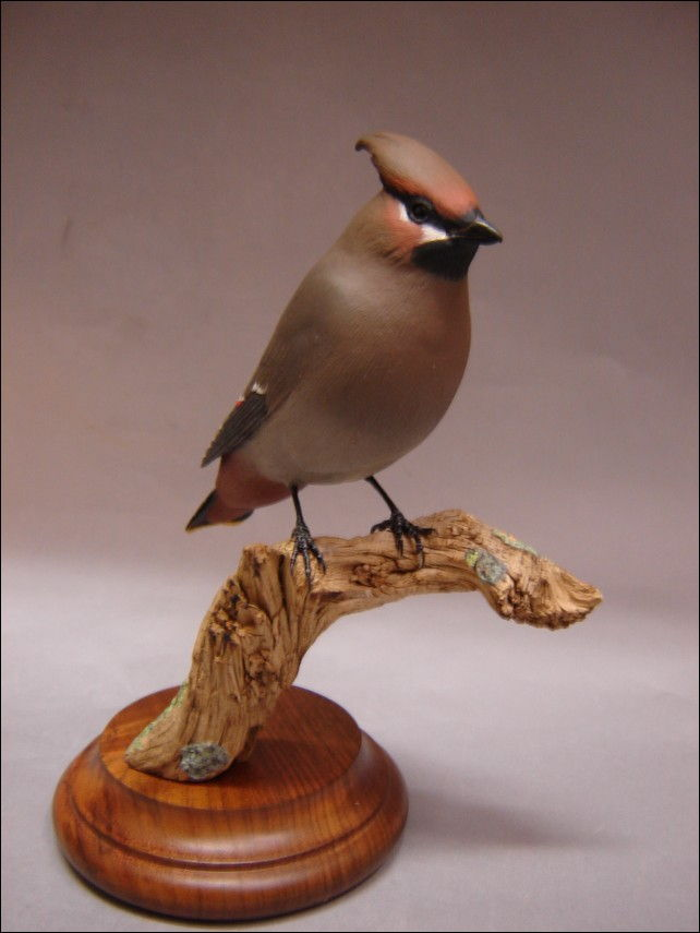 Click to view detail for Sculpture - Bohemian Waxwing