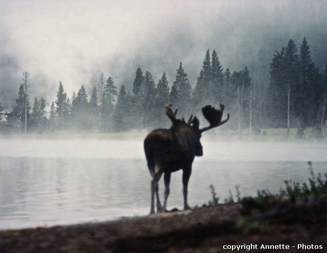 Click to view detail for Greeting Cards - Moose, Heart Lake