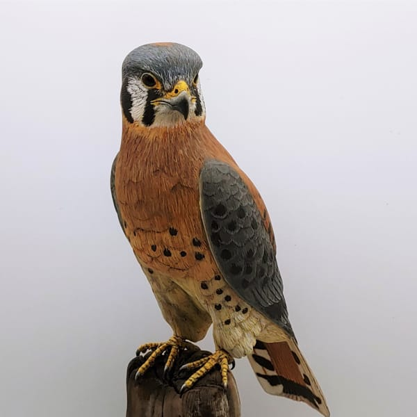 Click to view detail for American Kestrel $2900