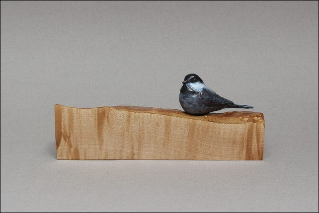 Click to view detail for FL042 Chickadee on Maple