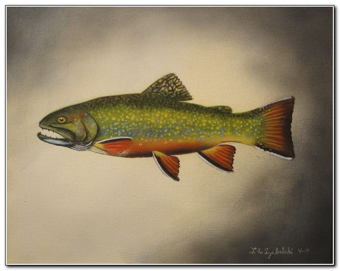 Brook Trout at Hunter Wolff Gallery